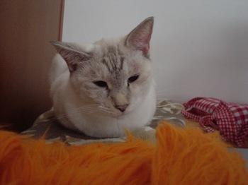 2011Oct21-Sunny1.jpg
