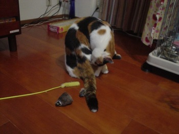 2011Oct22-Donna2.jpg