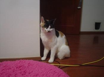 2011Oct23-Donna6.jpg