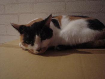 2011Oct25-Donna2.jpg