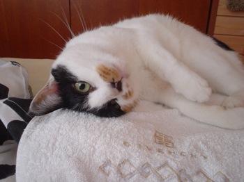 2011Oct25-Donna3.jpg