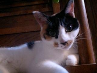 2011Oct25-Donna5.jpg