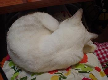 2011Oct25-Sunny6.jpg