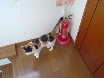 2011Oct26-Donna1.jpg