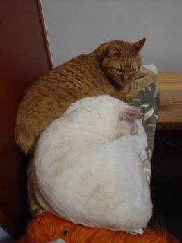 2011Oct26-Ram&Sunny4.jpg