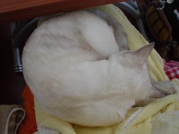 2011Oct27-Sunny2.jpg