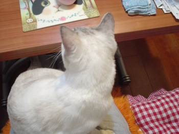2011Oct27-Sunny4.jpg