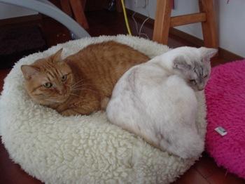 2011Oct28-Ram&Sunny1.jpg