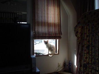 2011Oct29-Sunny2.jpg