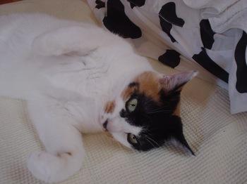 2011Oct30-Donna1.jpg