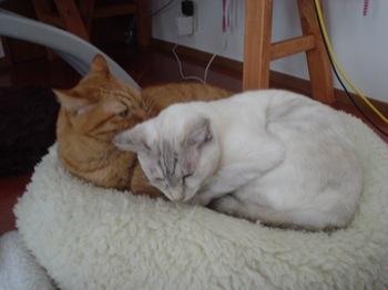 2011Oct30-Ram&Sunny1.jpg
