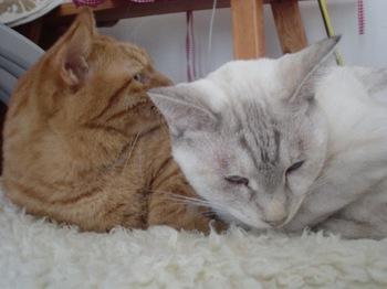 2011Oct30-Ram&Sunny2.jpg