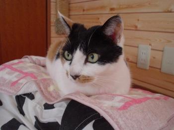 2011Oct31-Donna1.jpg