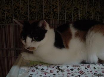 2011Sep23-Donna4.jpg