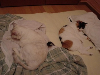 2011Sep27-Donna&Sunny1.jpg