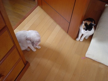 2011Sep27-Donna&Sunny2.jpg