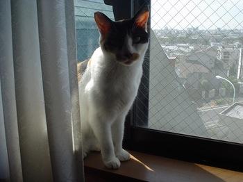 2011Sep28-Donna2.jpg
