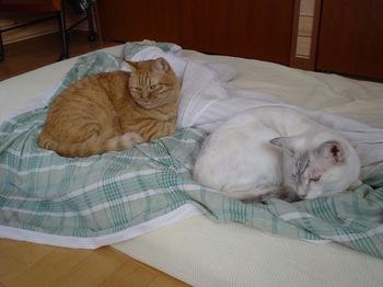 2011Sep28-Ram&Sunny.jpg