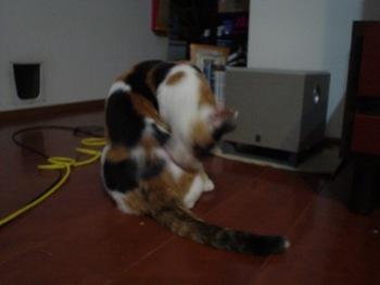 2011Sep30-Donna4.jpg