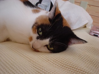 2011nov9-Donna1.jpg