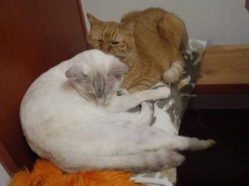 2011oct24-Ram&Sunny1.jpg