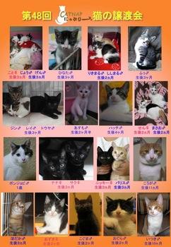 48回参加猫ポスター.jpg