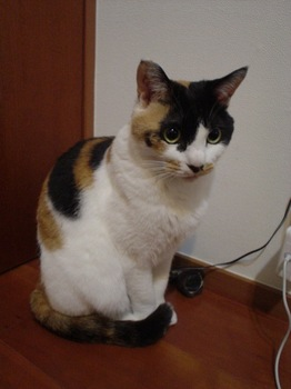 2010Apr10-Donna.jpg
