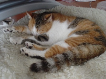 2010Apr2-Lilina2.jpg