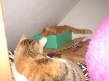 2010Apr2-Lilina&Ram.jpg