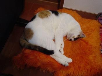 2010Apr3-Donna1.jpg