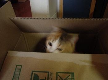 2010Apr3-Lilina2.jpg