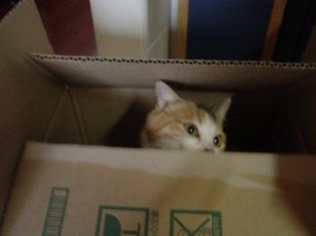 2010Apr3-Lilina3.jpg
