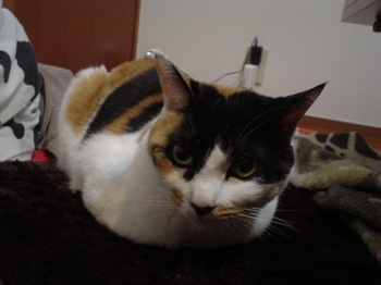 2010Apr4-Donna1.jpg