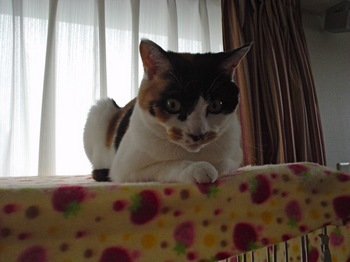 2010Apr4-Donna3.jpg