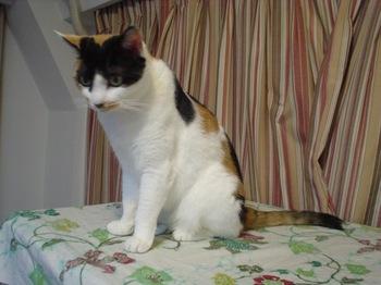 2010Aug22-Donna2.jpg