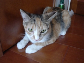 2010Aug24-Cocona1.jpg