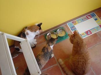 2010Aug26-Donna,Ram&Cocona2.jpg