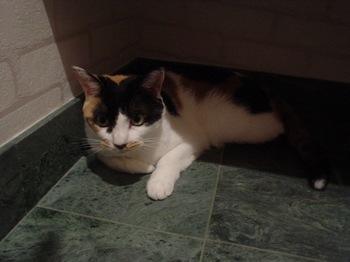 2010Aug28-Donna2.jpg