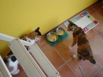 2010Aug28-Donna&Cocona1.jpg