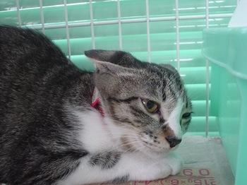 2010Aug29-こごみ.jpg