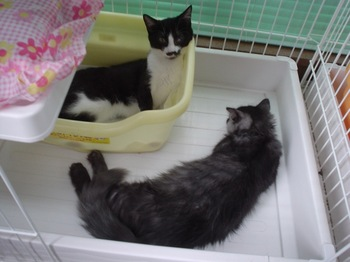 2010Aug29-はなこ&サンダー.jpg