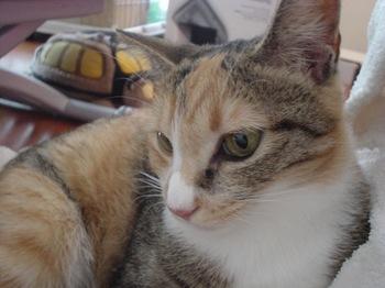 2010Aug31-Cocona2.jpg