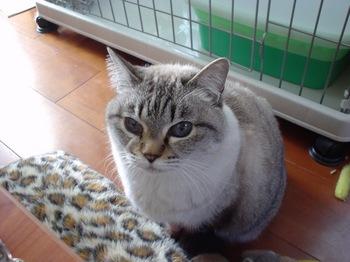 2010Jan10-Yoko2.jpg