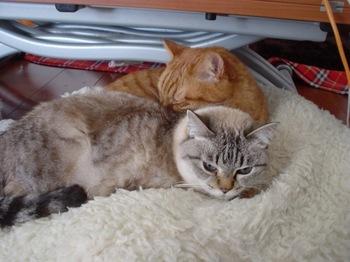 2010Jan10-Yoko&Ram2.jpg