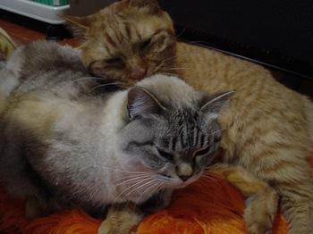 2010Jan10-Yoko&Ram5.jpg