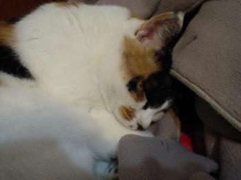 2010Jan11-Donna4.jpg