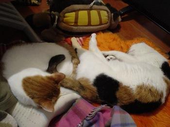 2010Jan25-Donna&HInagiku2.jpg