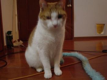 2010Jan25-Hinagiku5.jpg