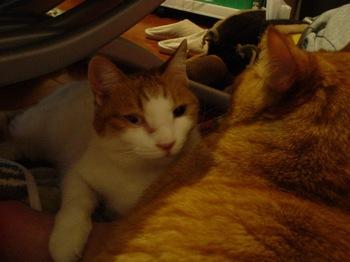 2010Jan25-Ram&Hinagiku2.jpg