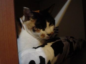 2010Jan4-Donna3.jpg